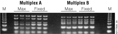 Multiplex PCR analysis on genomic DNA purified from blood.